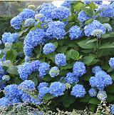 visit gales garden center in maple heights for your landscaping gardening and bird feeding needs - Gales Garden Center