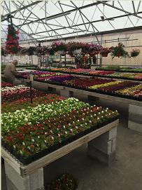 let gales help you get growing - Gales Garden Center
